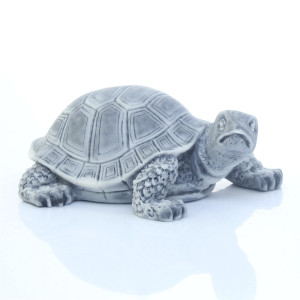 Черепаха малая 1